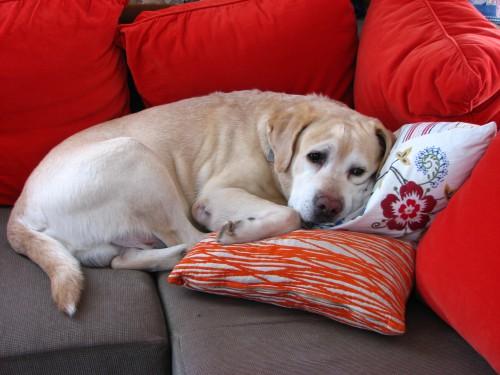 犬も冬は節々が痛む?