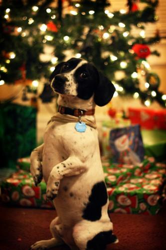 クリスマスに注意!?