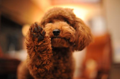 骨折しやすい犬種