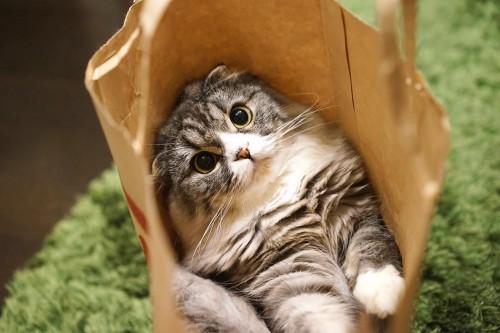 2月22日は猫の日★
