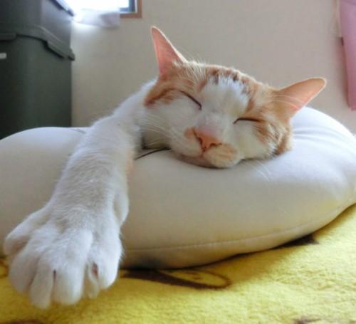 ほとんど寝ている猫。