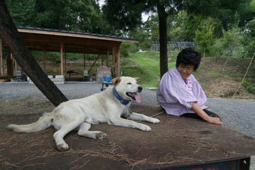 犬とおばあちゃん