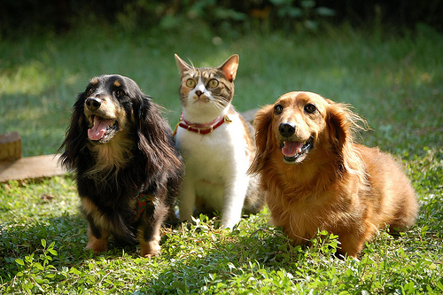 犬、猫血液型