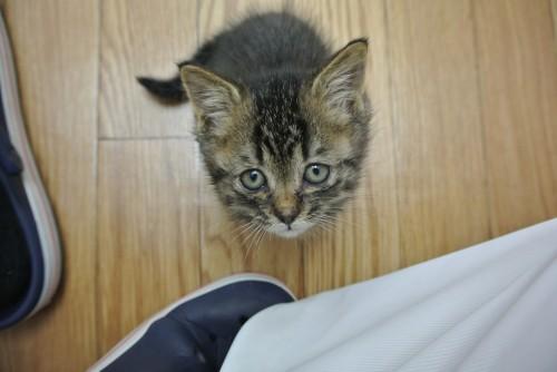 子猫の里親さんが見つかりました☆