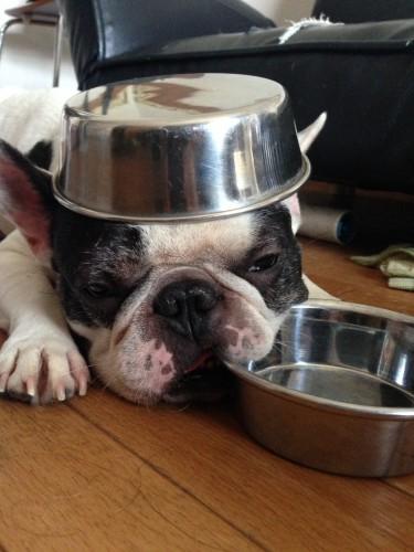 犬はなぜ食べるのがはやいの?