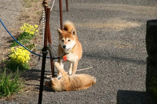 猫が犬を逆転!?