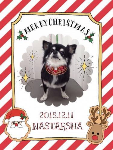 2015.12.11NASTARSHA