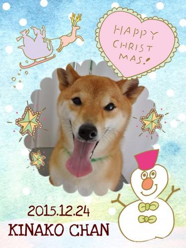 2015.12.24きなこ