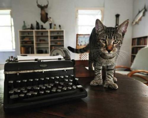 幸福を呼ぶ猫・ヘミングウェイキャットとは?