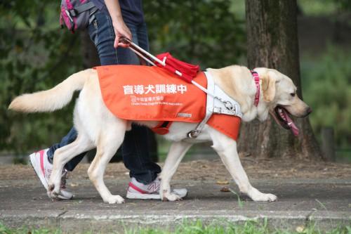 第32回補助犬健康診断が開催されます。
