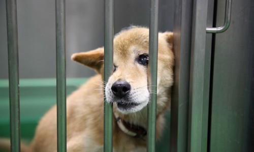 動物愛護教育センター