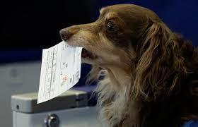ペットと一緒に飛行機に乗れる!?