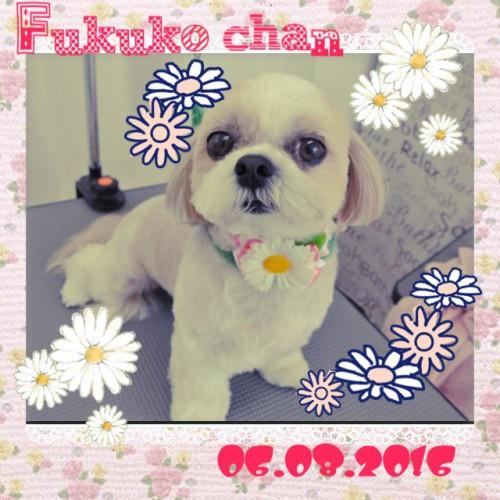 2016.06.08 Fukuko