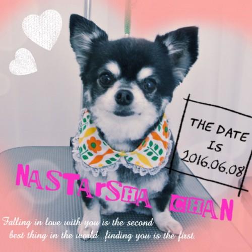 2016.06.08 NASTARSHA