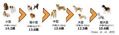 犬 平均寿命 体格