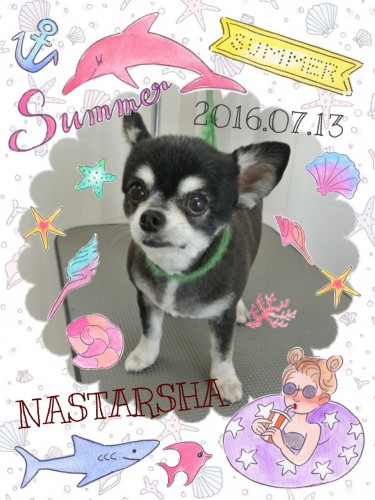 2016.7.13NASTARSHA