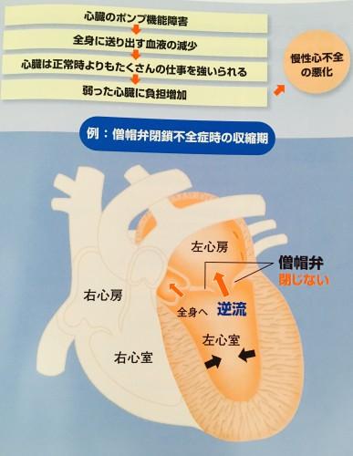 犬の心臓病について。