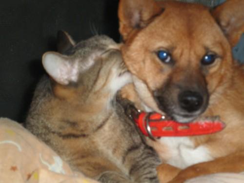 動物愛護週間