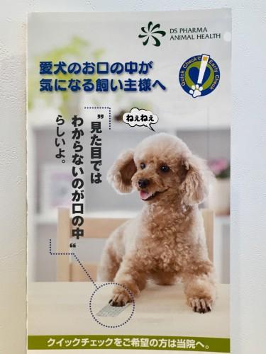 犬 歯周病検査