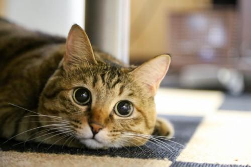 猫の腎臓病の原因が解明!?