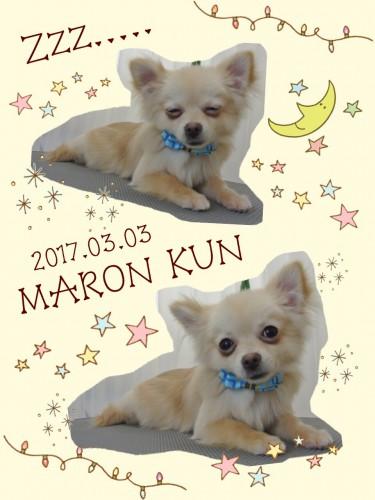 2017.3.3マロン