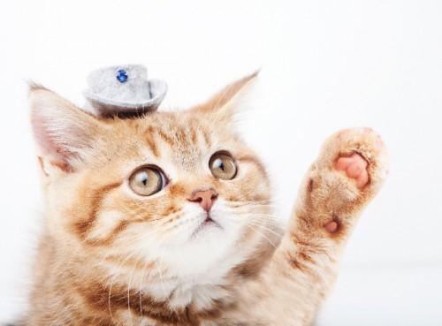 改めて猫のフィラリア症について
