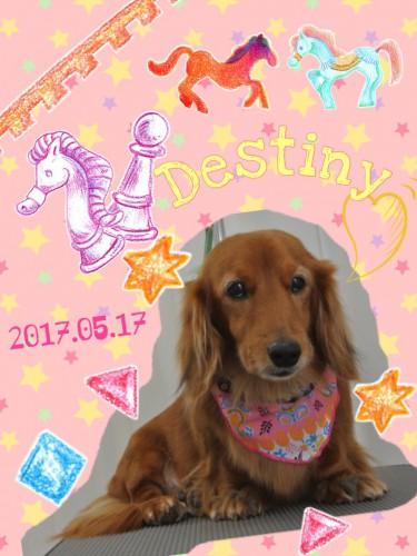 2017.5.17Destiny
