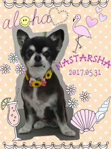 2017.5.31NASTARSHA