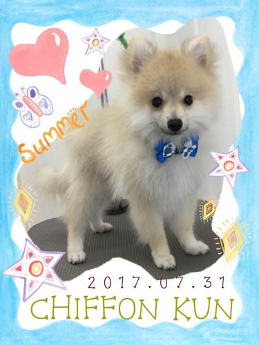 2017.7.31シフォン