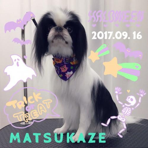2017.9.16松風