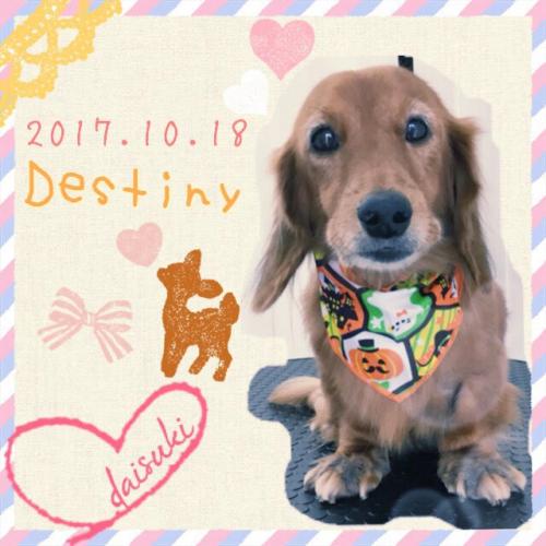 2017.10.18Destiny