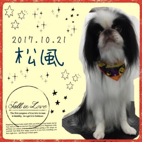 2017.10.21松風