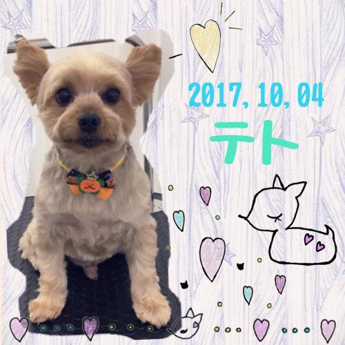 2017.10.4テト