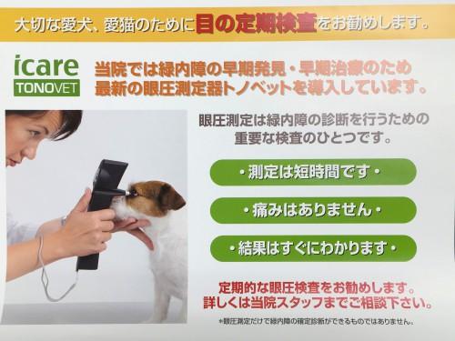 犬 緑内障 眼圧