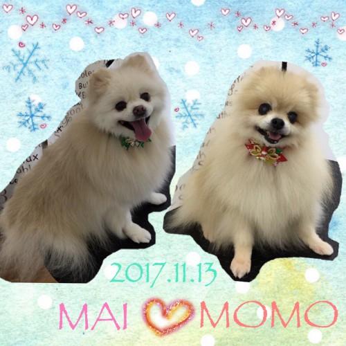 2017.11.13マイ、モモ