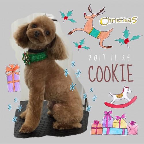2017.11.24クッキー