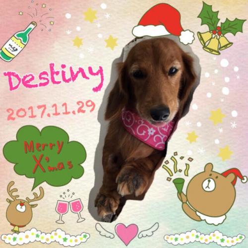 2017.11.29Destiny