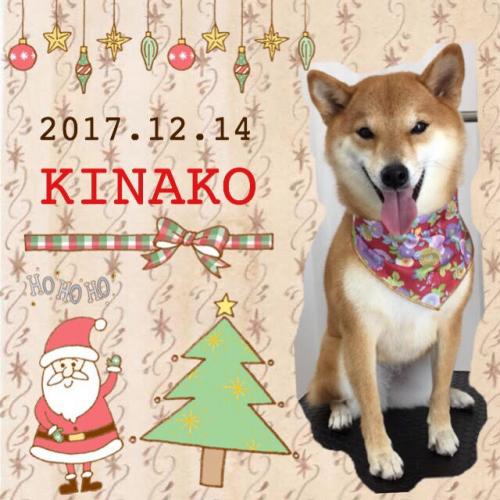 2017.12.14きなこ