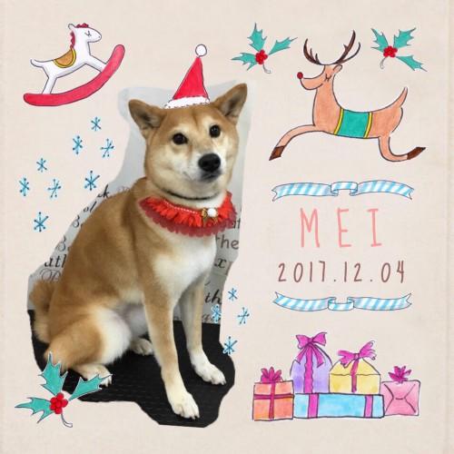2017.12.4メイ