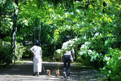 犬を飼うと死亡リスクが低下する?