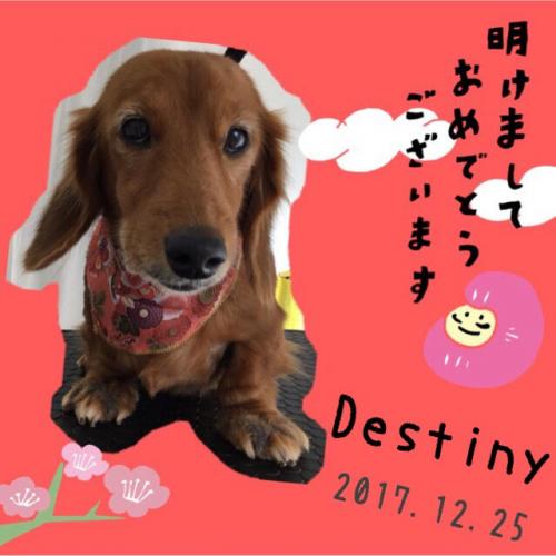 トリミング2017.12.25~30(スタッフブログ)