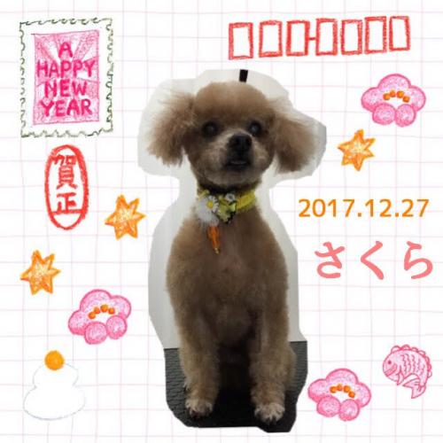 2017.12.27さくら