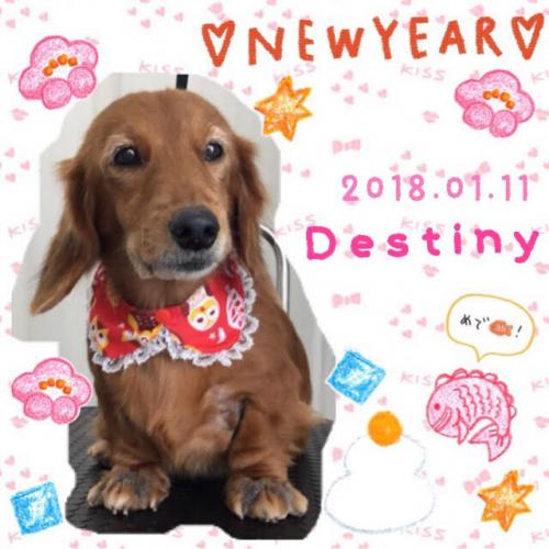 2018.01.11Destiny