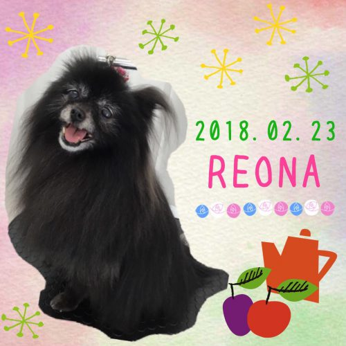 2018.2.23レオナ
