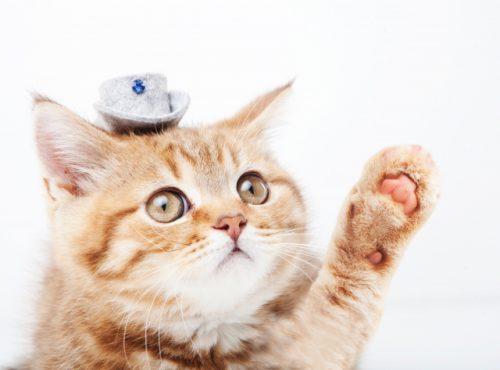 猫の名前ランキング2018☆彡