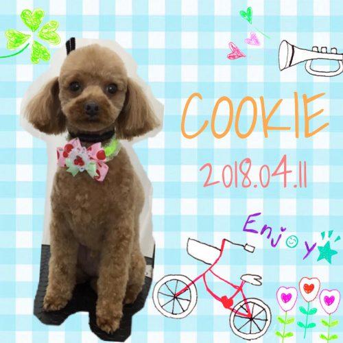 2018.4.11クッキー