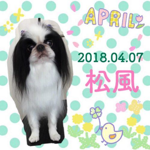 2018.4.7松風