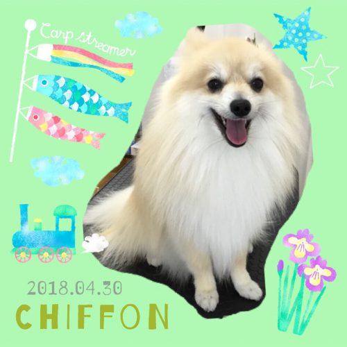 2018.4.30シフォン