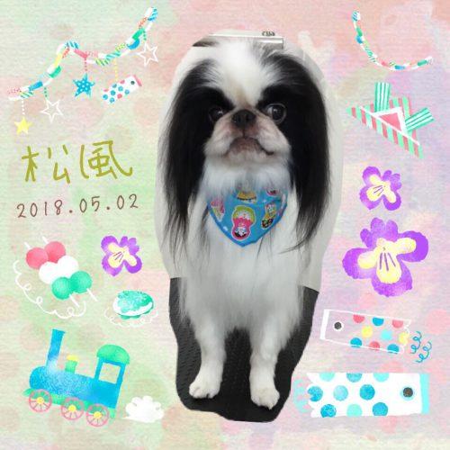 2018.5.2松風