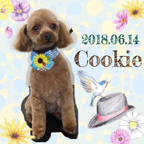 2018.6.14クッキー